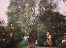 Jardín Montau3